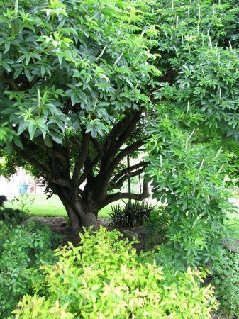 Les jardins de coursiana 2 la visite guid e du jardin l 39 anglaise paperblog - Jardins a l anglaise ...