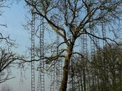 arbres montent jusqu'au ciel