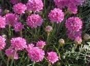 """Concours photos """"Plantes vivaces"""" (jusqu'au octobre 2009)"""