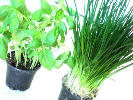 herbes ar matiques fra ches dans la cuisine lire. Black Bedroom Furniture Sets. Home Design Ideas