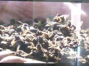 abeilles poignées
