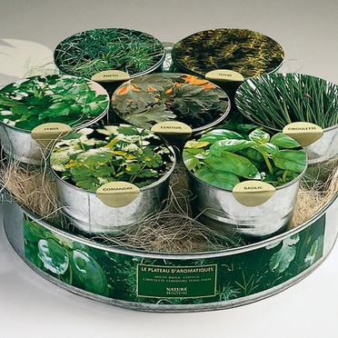 Astuces de cuisine et herbes aromatiques paperblog for Plante aromatique cuisine