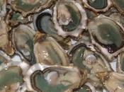huîtres bassin d'Arcachon nouveau marché