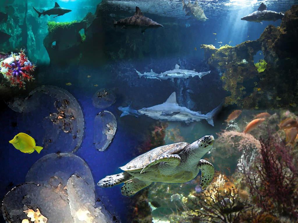 Creation Nicolas - Aquarium de La Rochelle - Paperblog