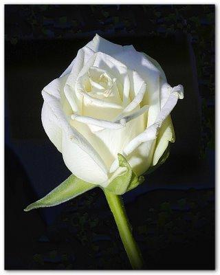 La signification des fleurs voir for Offrir un miroir signification