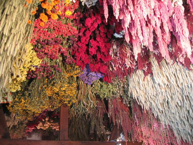 Faire s cher les fleurs deson jardin paperblog - Faire secher des roses ...