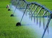 L'eau l'agriculture dans pays riches