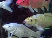 poissons rétrécissent