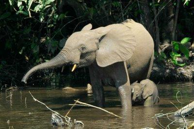 La guerre hors limites : qu'ont découvert les américains en tâtant l'éléphant