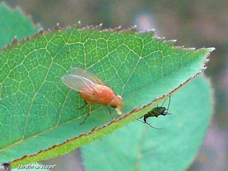 Des insectes qui participent à la production d'humus…