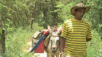 Une bibliothèque rurale itinérante à dos d'âne au Vénézuela