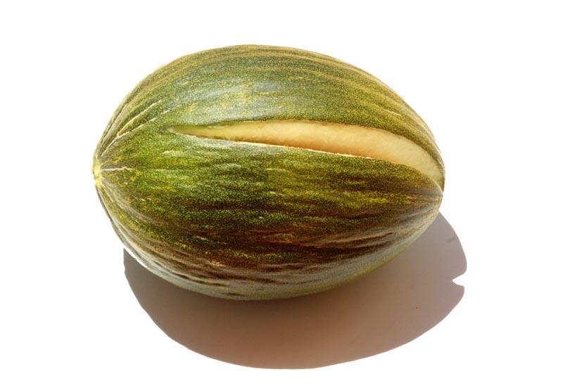 Melon Rochet temporao melao