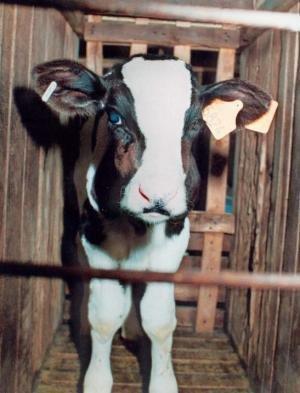 Quand on dit vache à lait...on ne l'imagine pas à quel point!
