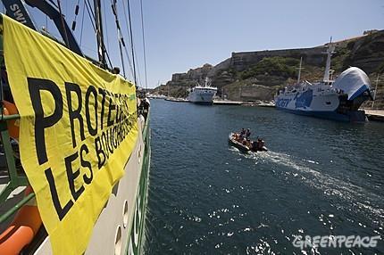 Le Rainbow Warrior en Corse : une flottille pour protéger les Bouches de Bonifacio