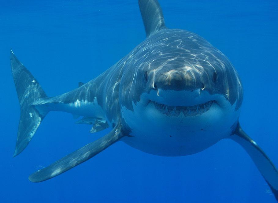 Shark Week : Les dents de la mer 1916