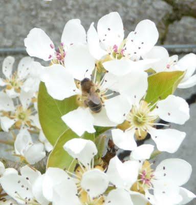 une ruche dans chaque jardin sur chaque balcon et sur chaque toit paperblog. Black Bedroom Furniture Sets. Home Design Ideas