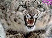 pour Snow Leopard