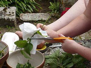 La recette punitive du jour la soupe aux orties paperblog - Quelles orties pour la soupe ...