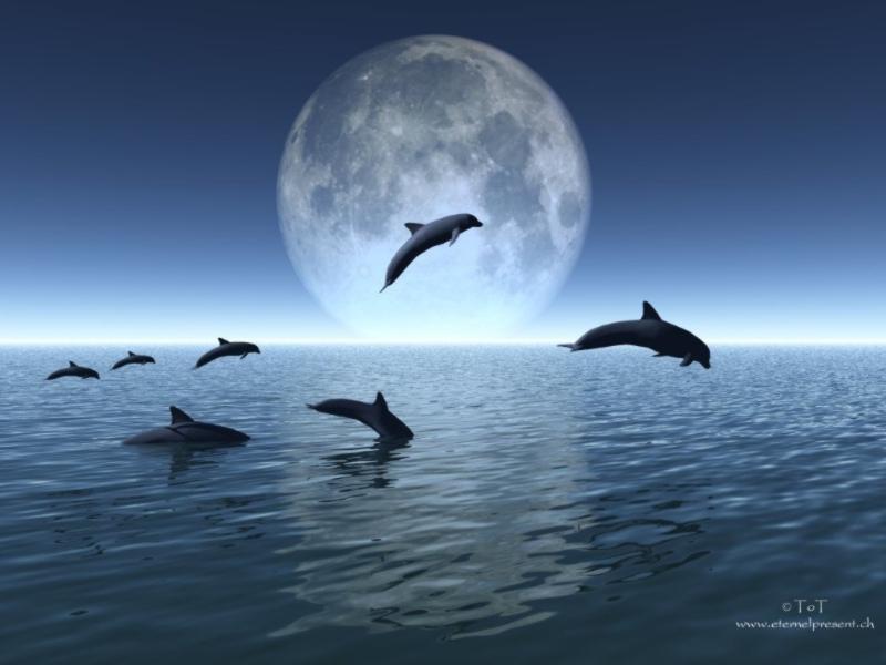 dauphins800.jpg