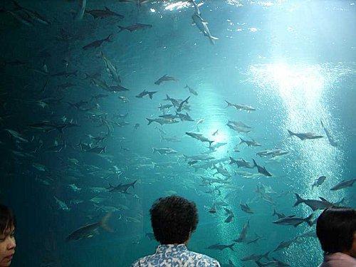 L aquarium de nong khai est ouvert paperblog for Aquarium ouvert
