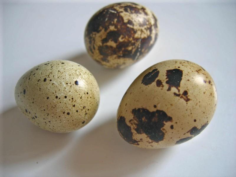 Parlons des oeufs notre mets quotidien au ramadan d couvrir - Conservation des oeufs de poule ...