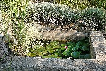 Bassin de jardin entretien et nettoyage d 39 automne for Nettoyage de jardin