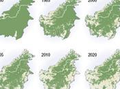 Penan Bornéo, luttent contre déforestation.