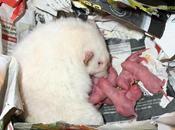 Rats: Peste 4ème génération