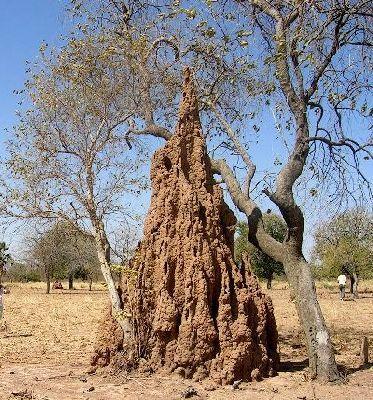 Retour sur plantes médicinales et leurs pratiques traditionnelles en milieu peule... par Oumar N'Diaye