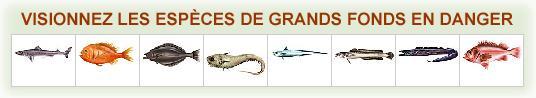 """Tournée """"Océans"""" de Greenpeace dans sept villes de France"""