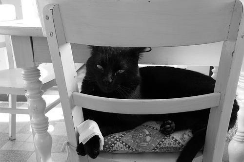 Un chat survit après avoir reçu 13 plombs dans la tête...