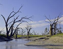 Australie,les premiers symptomes du rechauffement climatique