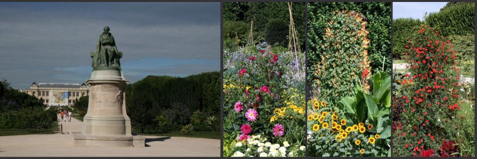 statue Lamarck jardin des plantes