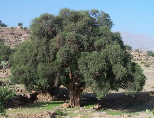 Essaouira, la bien gardee et Blog Eleonor