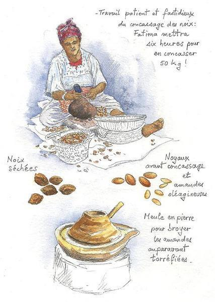 http://a7.idata.over-blog.com/0/15/01/89/jour-179/arganiers-concassage-des-noix_.jpg