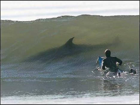 palau-va-sauver-requins-L-3