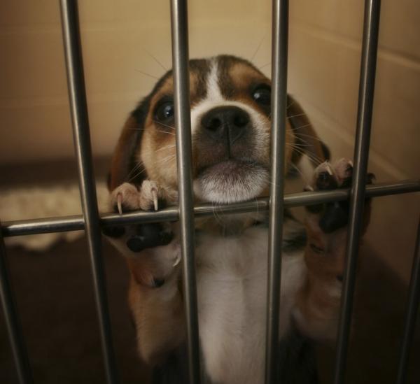 Des expériences aberrantes sur les chiens et les chats conduites en France. Une enquête de One Voice