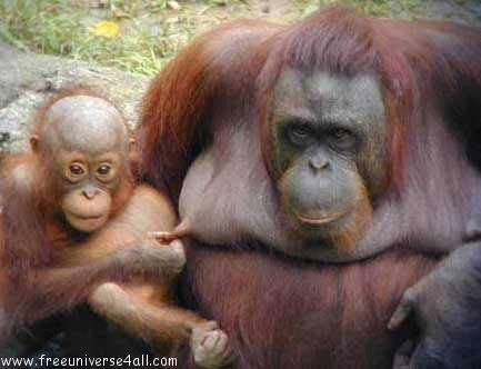Images d'animaux amusantes
