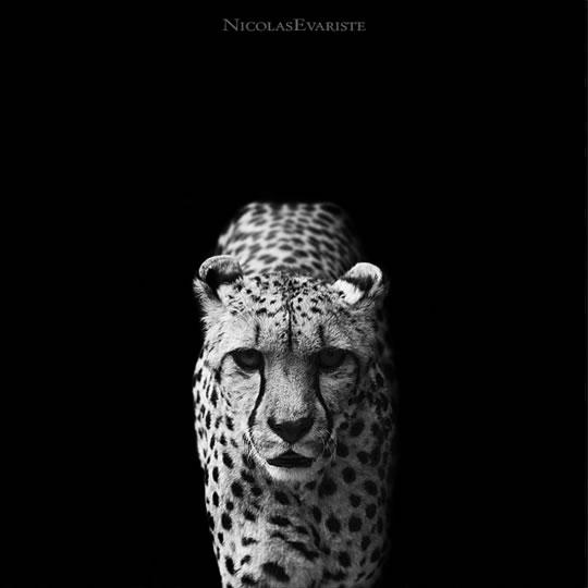 Dark Zoo Nicolas Evariste