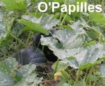 legumes-automne-potirons-musques.jpg