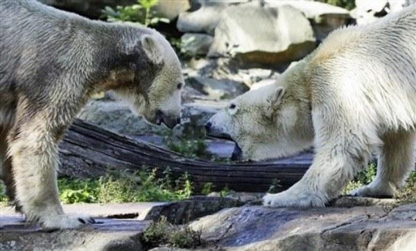 Knut et Gianna