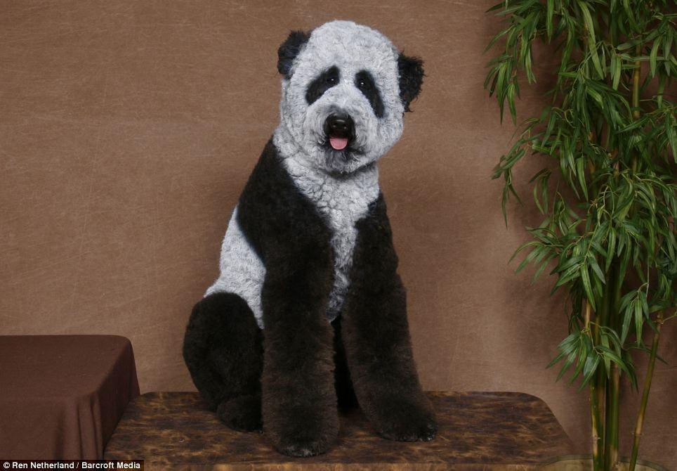 Des toutous a sa mémére transformés en panda, chameau...