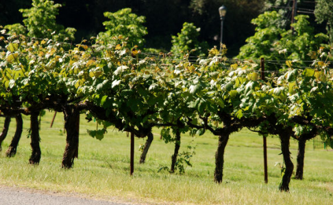 Un livre Un vin : l'arche Wackenheim vers les Côtes du Luberon