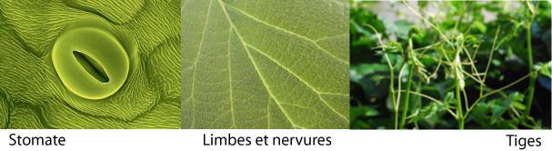 D pollution de l air int rieur par les plantes d couvrir - Depollution par les plantes ...