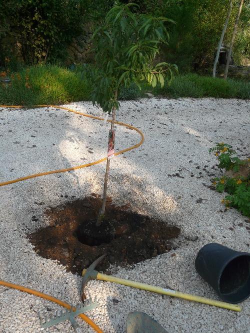 La plantation d'arbres fruitiers...