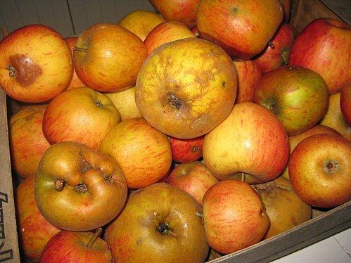 Confiture de pommes, noix, raisins et pain d'épice