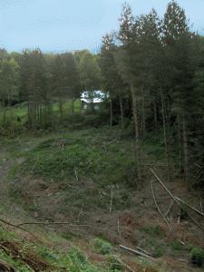 coupe-de-bois-en forêt
