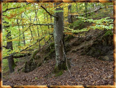 arbres en forêt