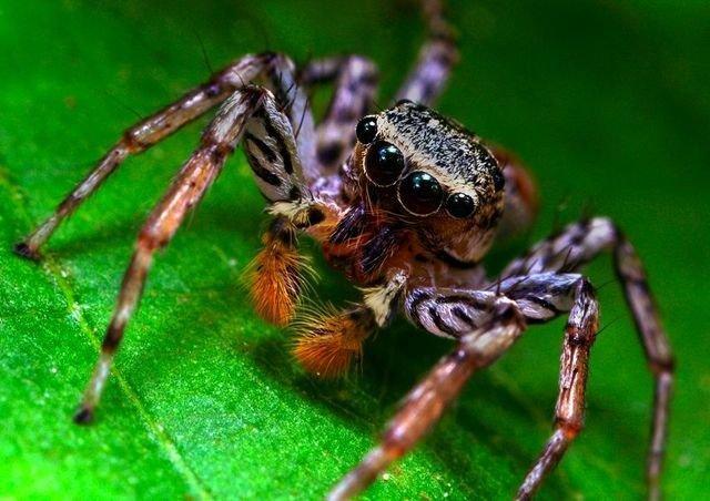 Des insectes vus de très pret