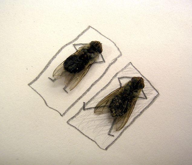 http://media.paperblog.fr/i/237/2378506/lart-avec-mouches-mortes-L-2.jpeg